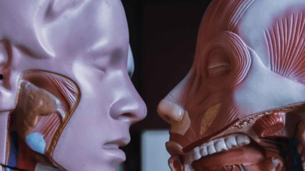 Два анатомических скелета направлены друг на друга